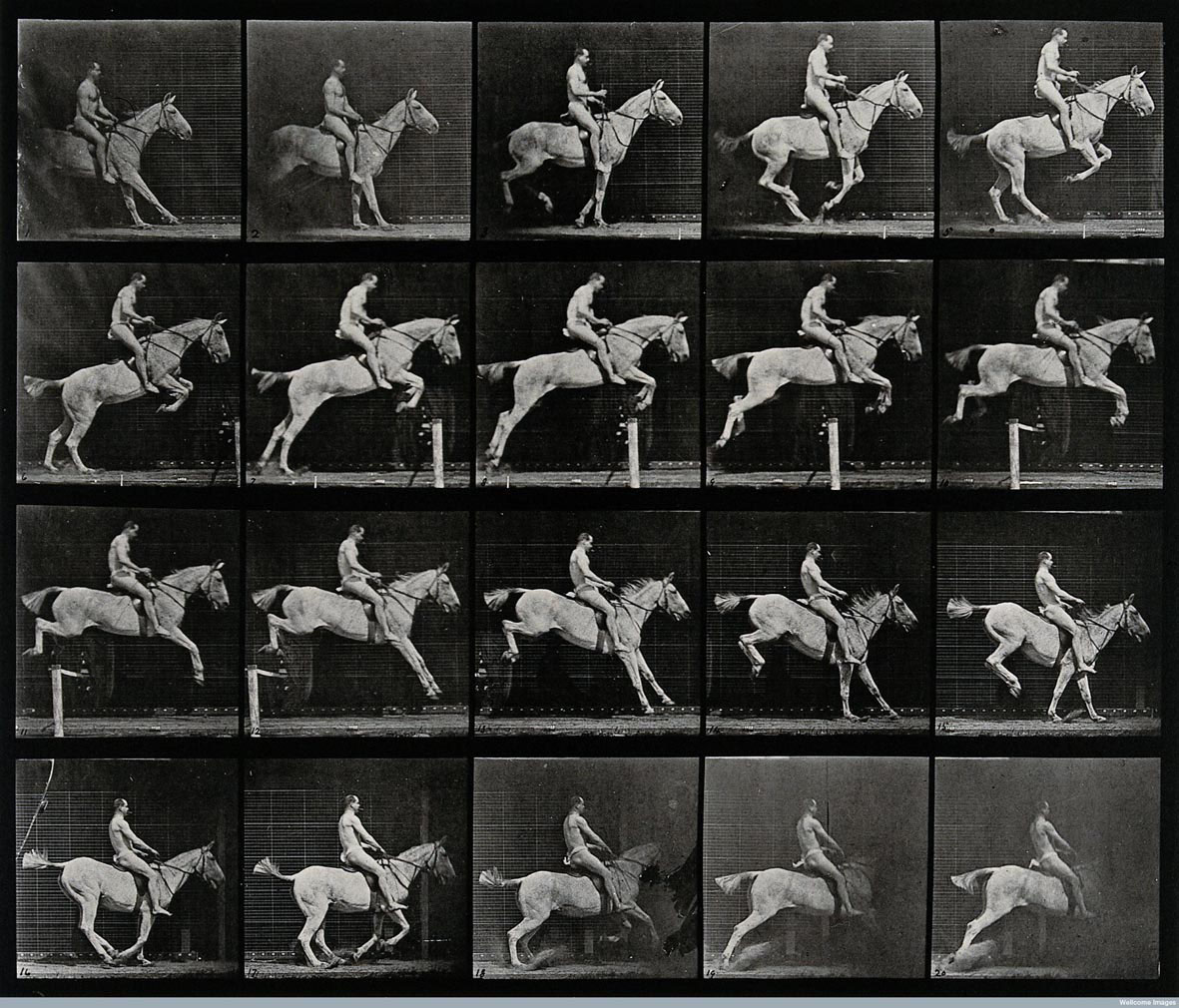 Muybridge A horse jumping a hurdle 1887 255 x 30 cm Wellcome Library di Londra
